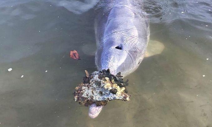 Đàn cá heo mang 'quà' vào bờ