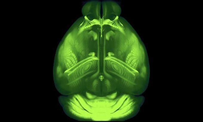 Bản đồ 3D độ phân giải cao của não chuột