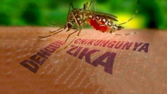 Phát hiện người nhiễm virus gây bệnh đầu nhỏ Zika